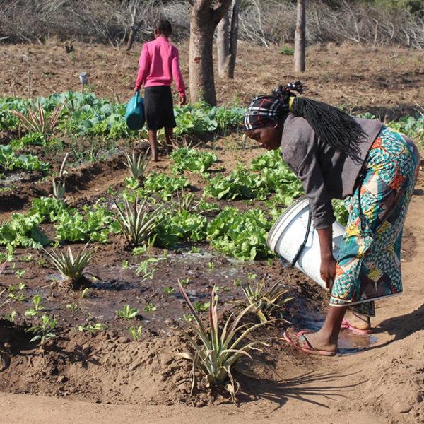 sementi resistenti alla siccita